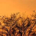 谁是树枝,谁是鸟儿?(14.09.14)
