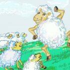 第419期:不见了一只羊