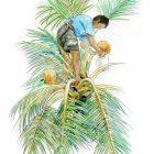 第481期:橡胶、油棕、椰子