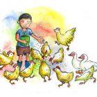 第505期:鸡也有社会