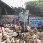 为原住民养鸡——BONACOM龙村生态休闲农场(22.03.2020)